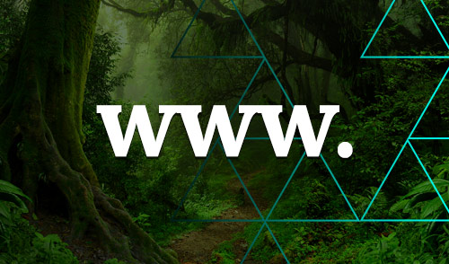 Websites can be carbon neutral. Here's how…
